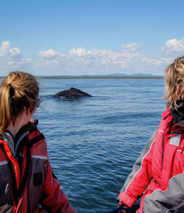 Whale Research Expeditions in the St. Lawrence (Mingan and Gaspe)