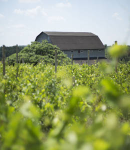 Bromont Winery - Lodge & Shop