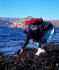 Harvesting mussels at low tide – Kangiqsujuaq shores